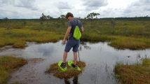 A little islet in the swamp
