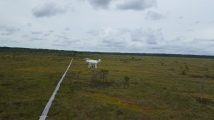 Drone above the swamp
